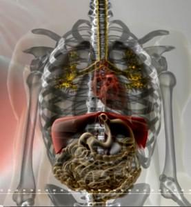 Pritisak na unutrašnje organe prilikom sjedenja